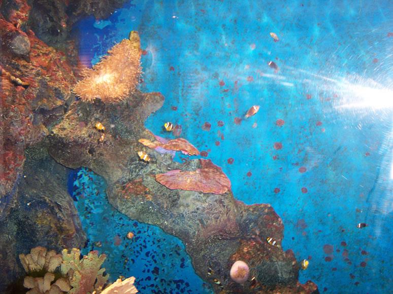 Phuket / phuket_aquarium (13).JPG