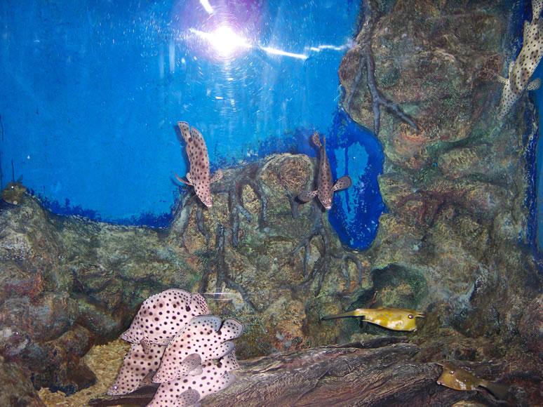 Phuket / phuket_aquarium (7).JPG