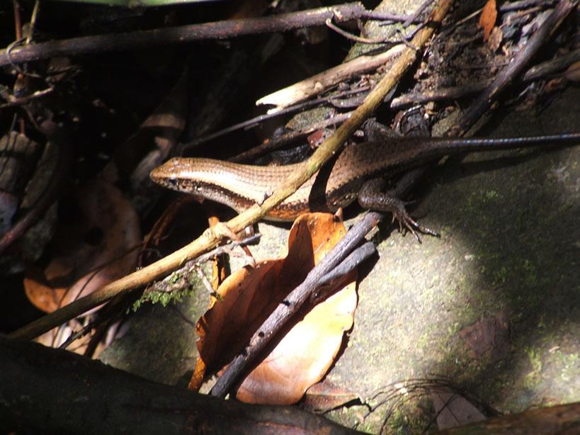 Foresta Pluviale/animali (9).jpg