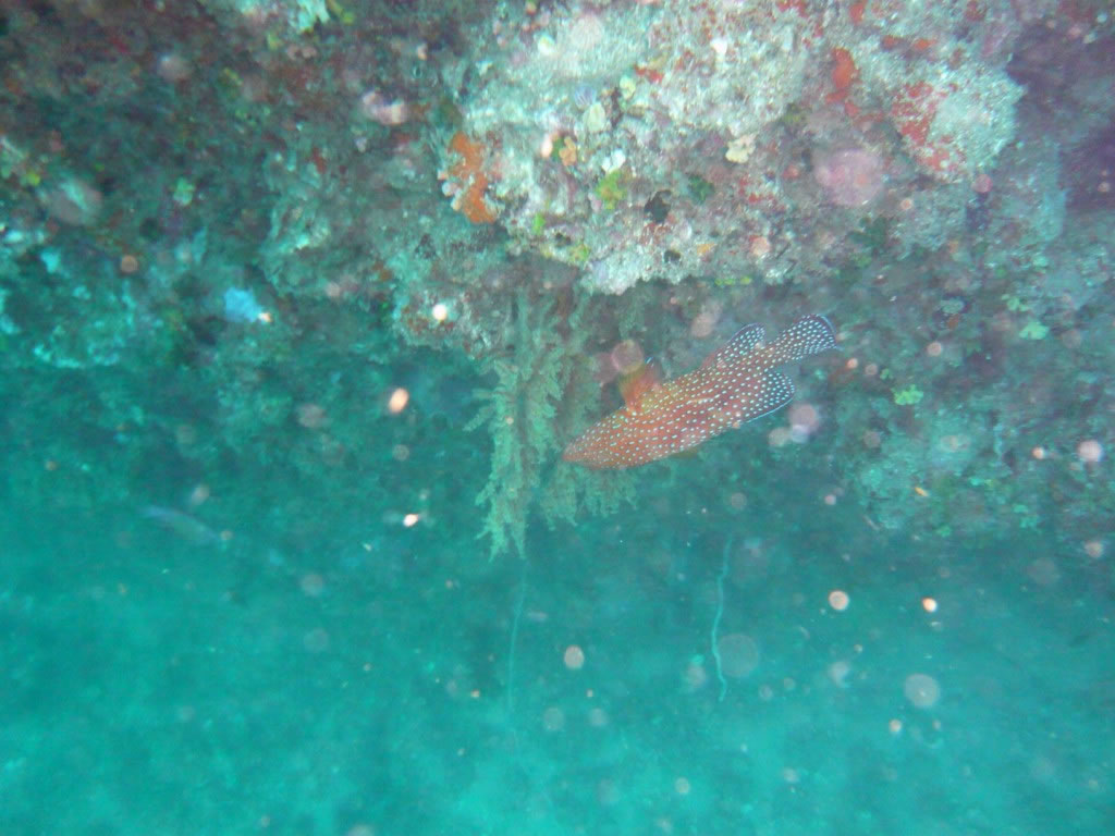Diving diving 36 1280x768 jpg - Foto dive nude ...